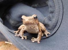 frog took a liking to Erik's cap
