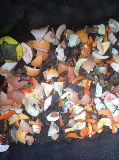 A layer of food waste to be covered. Not sure why there are egg shells in there!