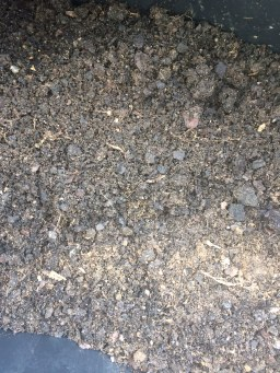 Soil created from my compost bin