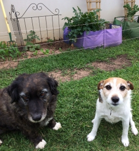 Hamish & Lucy