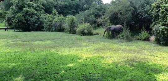Nkwali Camp - South Luangwa